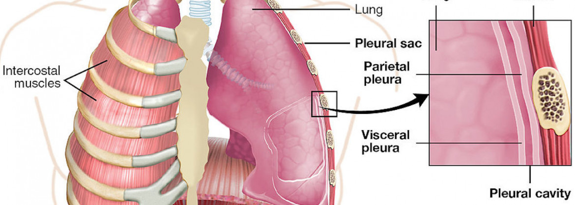 Lung & Respiratory Health